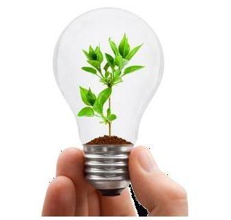 Экологические правонарушения: понятие, классификация и административная ответственность