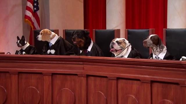 Правила выгула собак в городе, исключения для щенков