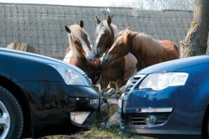 Как узнать, какой транспортный налог на 249 лошадей? Правила уплаты налога