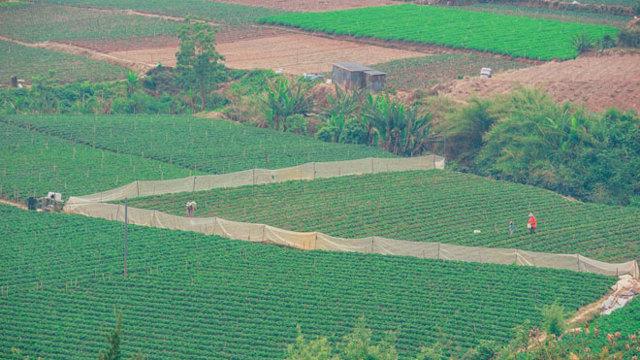 Как узнать владельца земельного участка: по кадастру и без него