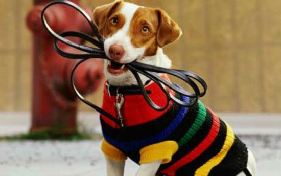 Правила содержания собак в многоквартирном доме в РФ: правовые особенности