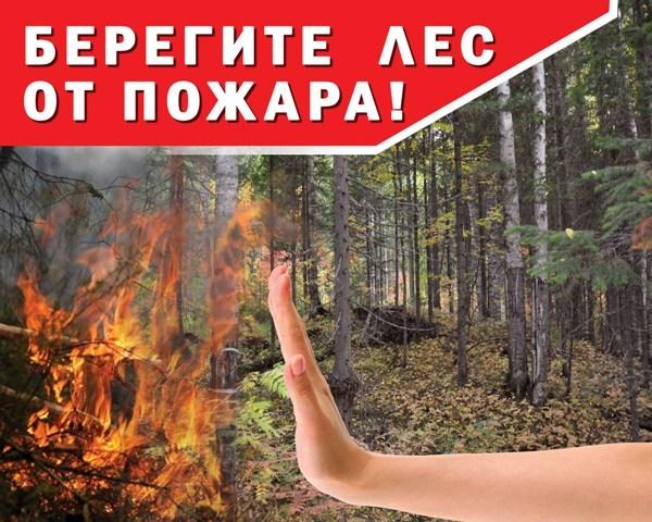 Рекомендации к оформлению и установке запрещающих знаков в лесу